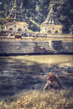 Affen in Pashupatinath Stockbilder