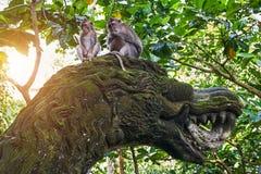 Affen sitzen auf Drachestatue im Ubud-Affe-Wald, Bali Stockfotos