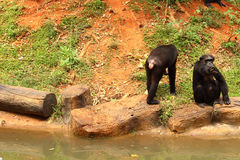 Affen sitzen gebetenen Snack Stockfoto