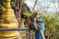 Affen in Thailand Krabi-Region lizenzfreie stockfotos