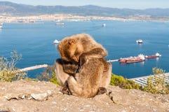 Affen von Gibraltar Lizenzfreie Stockfotos