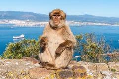 Affen von Gibraltar Lizenzfreie Stockfotografie