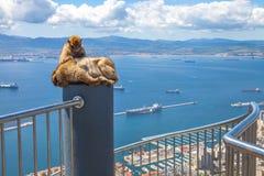 Affen von Gibraltar Stockbilder