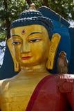 Affen von Swayambunath Stupa Kathmandu, Nepal Lizenzfreie Stockbilder