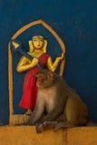Affen von Swayambunath Stupa Kathmandu, Nepal Lizenzfreies Stockfoto
