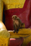 Affen von Swayambunath Stupa Kathmandu, Nepal Stockfotos