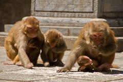 Affen von Swayambunath Stupa Kathmandu, Nepal Stockfoto