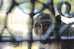 Affen wurden eingesperrt lizenzfreie stockfotografie