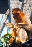 Affenkäfig Lizenzfreies Stockbild