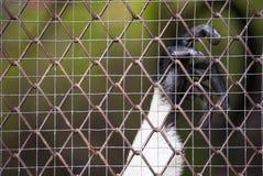 Affenkäfig Stockfoto
