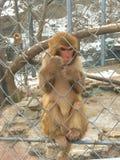 Affenkäfig Lizenzfreies Stockfoto