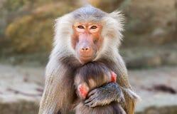 Affenmutter mit ihrem Kind lizenzfreie stockfotografie