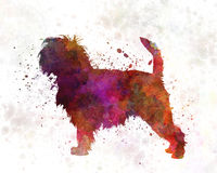 Affenpinscher 01 dans l'aquarelle Photo stock