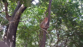 Affepark Thailand stockbild