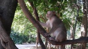 Affepark Thailand lizenzfreies stockfoto