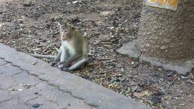 Affepark Thailand lizenzfreie stockbilder