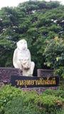 Affepark Thailand stockfotografie
