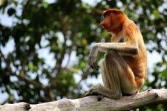 Affeporträt, das auf einem Baum sitzt Stockfotos