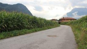 affermage Campagne de l'Autriche de plantation de maïs photo stock