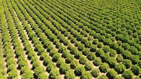 affermage Fruits et légumes croissants agricoles c de terre de ferme image libre de droits
