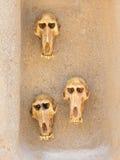 Affeschädel auf Wand Stockfotografie