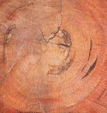 Affetti il vecchio larice del tronco Fotografia Stock