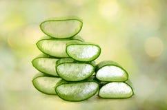 Affetti l'aloe Vera, una medicina di erbe molto utile per cura di pelle e Fotografie Stock