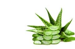 Affetti l'aloe Vera, una medicina di erbe molto utile per cura di pelle e Immagine Stock