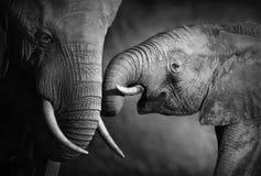 Affetto dell'elefante (elaborare artistico) Fotografia Stock