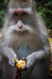 Affewald in Ubud, Bali Lizenzfreies Stockfoto