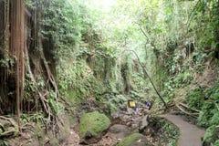 Affewald in Ubud, Bali Lizenzfreie Stockfotografie
