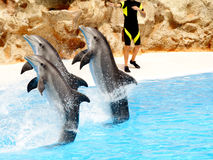 Affichage #5 de dauphin Image stock
