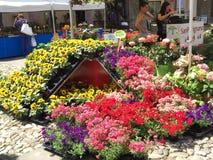 Affichage coloré de fleur en Italie Images stock