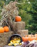 Affichage d'automne Images stock