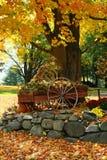 Affichage d'automne Image stock