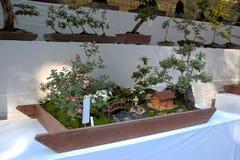 Affichage de bonsaïs Image libre de droits