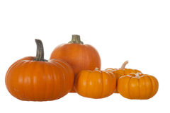 Affichage de cinq Pumpking Image stock