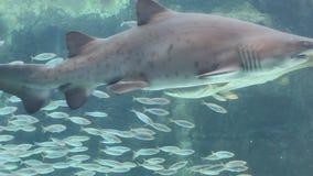 Affichage de poissons d'aquarium Photographie stock libre de droits