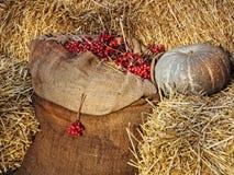Affichage de thanksgiving Le potiron sur des piles de foin et la toile de jute renvoient avec Image stock