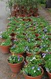 Affichage des fleurs et des plantes avec les étiquettes descriptives à la pépinière locale Photos stock