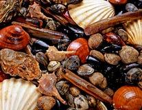 Affichage des mollusques et crustacés Images libres de droits