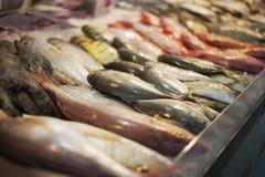 Affichage en gros plan des fruits de mer frais photographie stock libre de droits