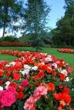 Affichage floral Photos libres de droits