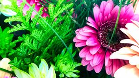 Affichage floral, la Manche Art Banner de Youtube photos stock