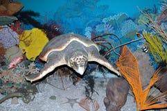 Affichage océanique Photo stock