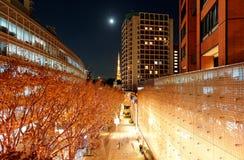 Affichage romantique d'illumination d'hiver dans Keyakizaka à Noël photos stock