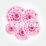Affiche élégante de vecteur avec de belles fleurs - dahlia et endroit roses pour le texte Carte de voeux de cru Vecteur illustration de vecteur