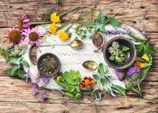 Affiche avec les herbes saines Photographie stock libre de droits