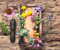 Affiche avec les herbes saines Photographie stock