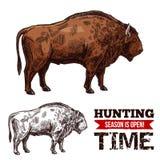 Affiche de vecteur de croquis de temps de chasse avec le buffle illustration stock